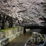 桜シーズン到来!会場見学のコツ